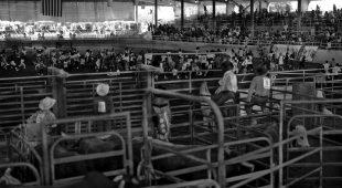 Matt Gunther Photographer Black Cowboys c-strip.jpg